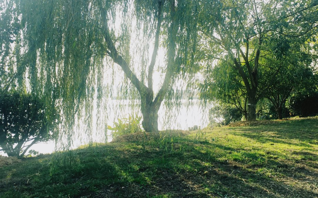 Dancing in the Chaos: Lessons from the Willow